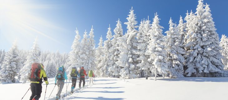 Group of 5 backcountry skiers going up towards a snow covered christmas tree forest on a beautiful sunny day